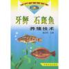 牙鲆 石斑鱼养殖技术——水产养殖新技术