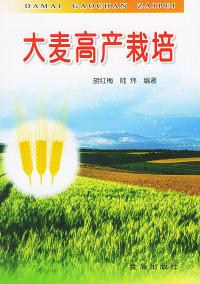 大麦高产栽培
