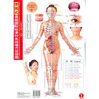 便携式最新国际标准针灸经络穴位挂图(女性)