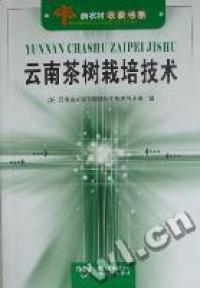 云南茶树栽培技术