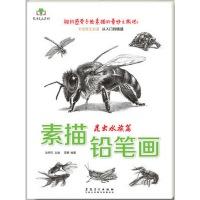 素描铅笔画·昆虫水族篇