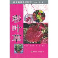 彩叶草-彩图版养花说明书