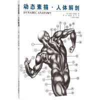 动态素描.人体解剖